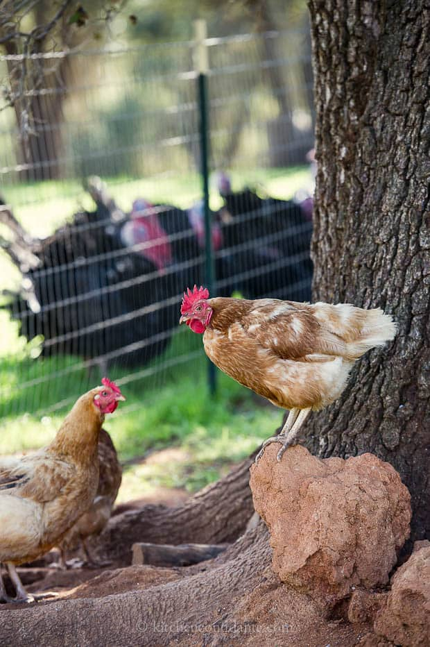 Diestel Turkey Ranch | Kitchen Confidante | Chickens