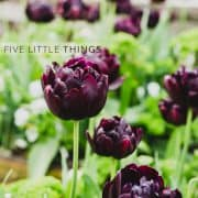 Five Little Things | Kitchen Confidante | Purple Tulips