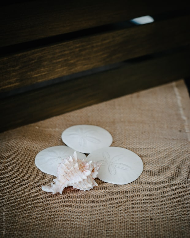 Tillamook #Blog2Farm | www.kitchenconfidante.com | Seashells