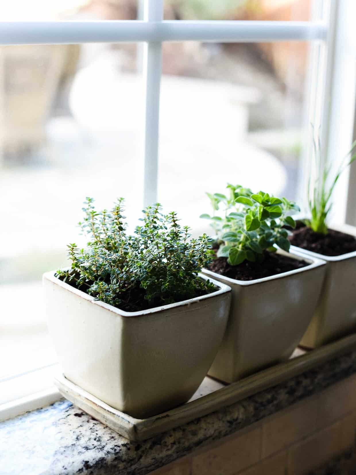 Indoor Kitchen Garden How To Start An Indoor Herb Garden Kitchen Confidante