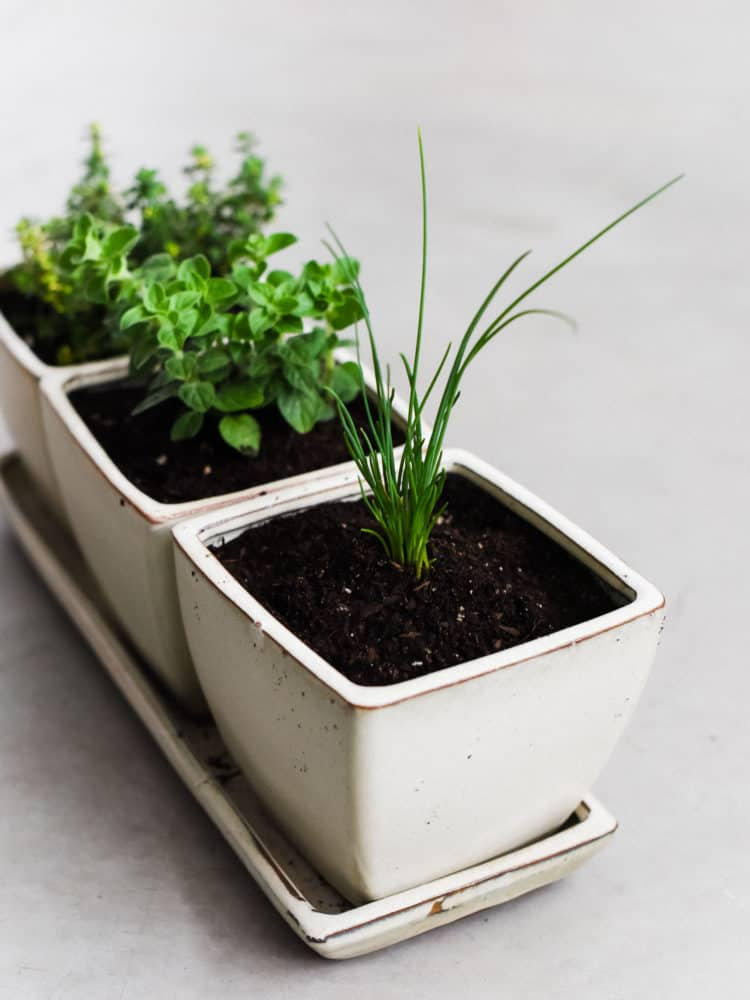 enjoy fresh herbs all year long learn how to start an indoor herb garden - How To Start An Indoor Herb Garden