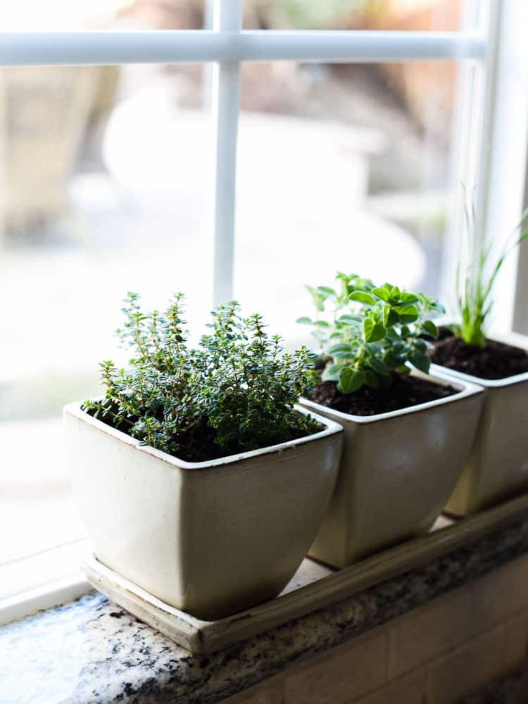Enjoy fresh herbs all year long! Learn how to start an indoor herb garden, and which herbs do well for year-round cooking.