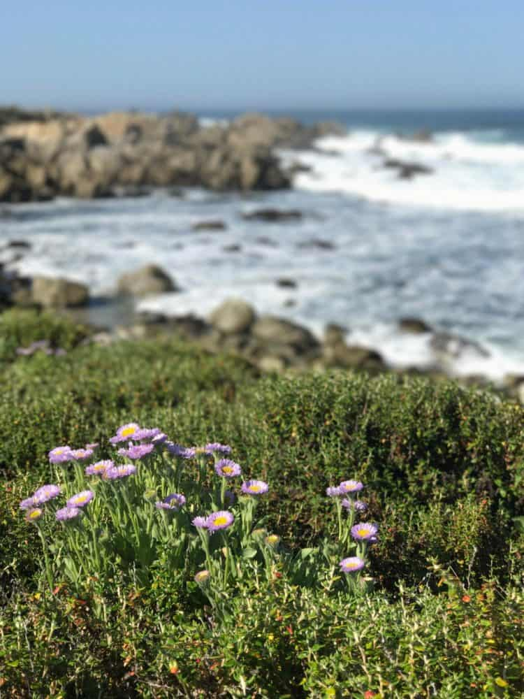 Five Little Things I loved the week of April 28, 2017.