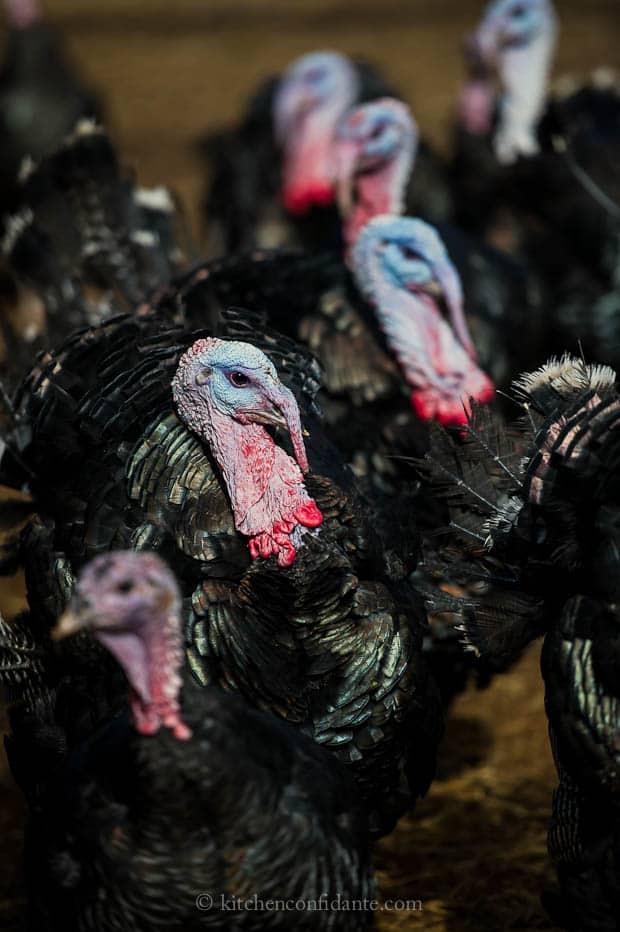 Diestel Turkey Ranch | Kitchen Confidante | Turkey