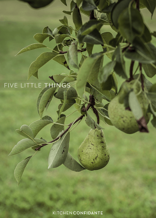 Five Little Things - August 16, 2013 | www.kitchenconfidante.com | Pear Tree