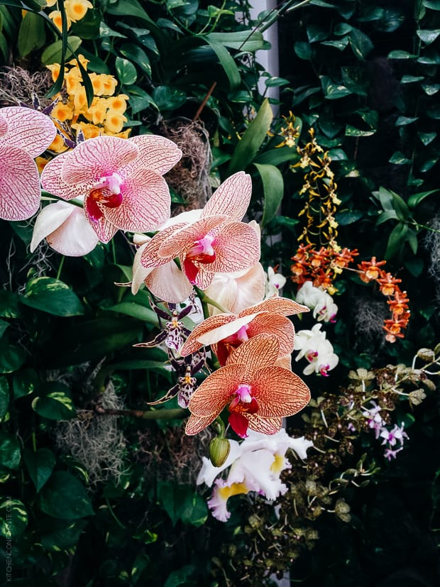 A flowering plant in Honolulu.