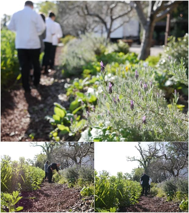 Walking through the CIA Herb Garden at the Culinary Institute of America in St. Helena.