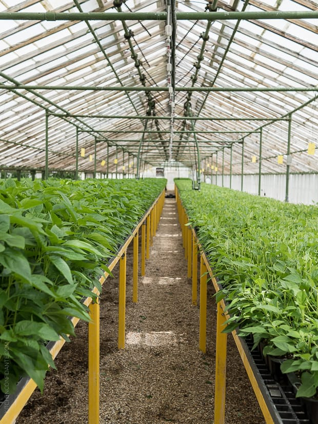 Tabasco Greenhouse and Tabasco Pepper Plants.
