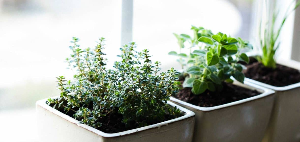 Learn How To Start An Indoor Herb Garden,