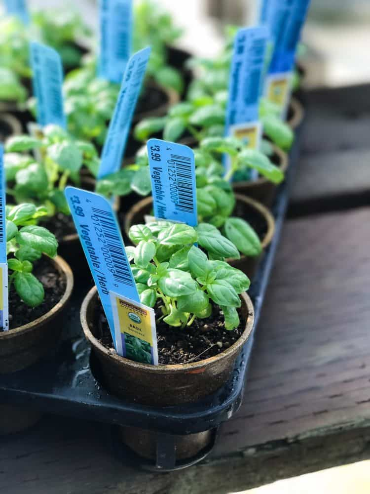 Enjoy Fresh Herbs All Year Long Learn How To Start An Indoor Herb Garden