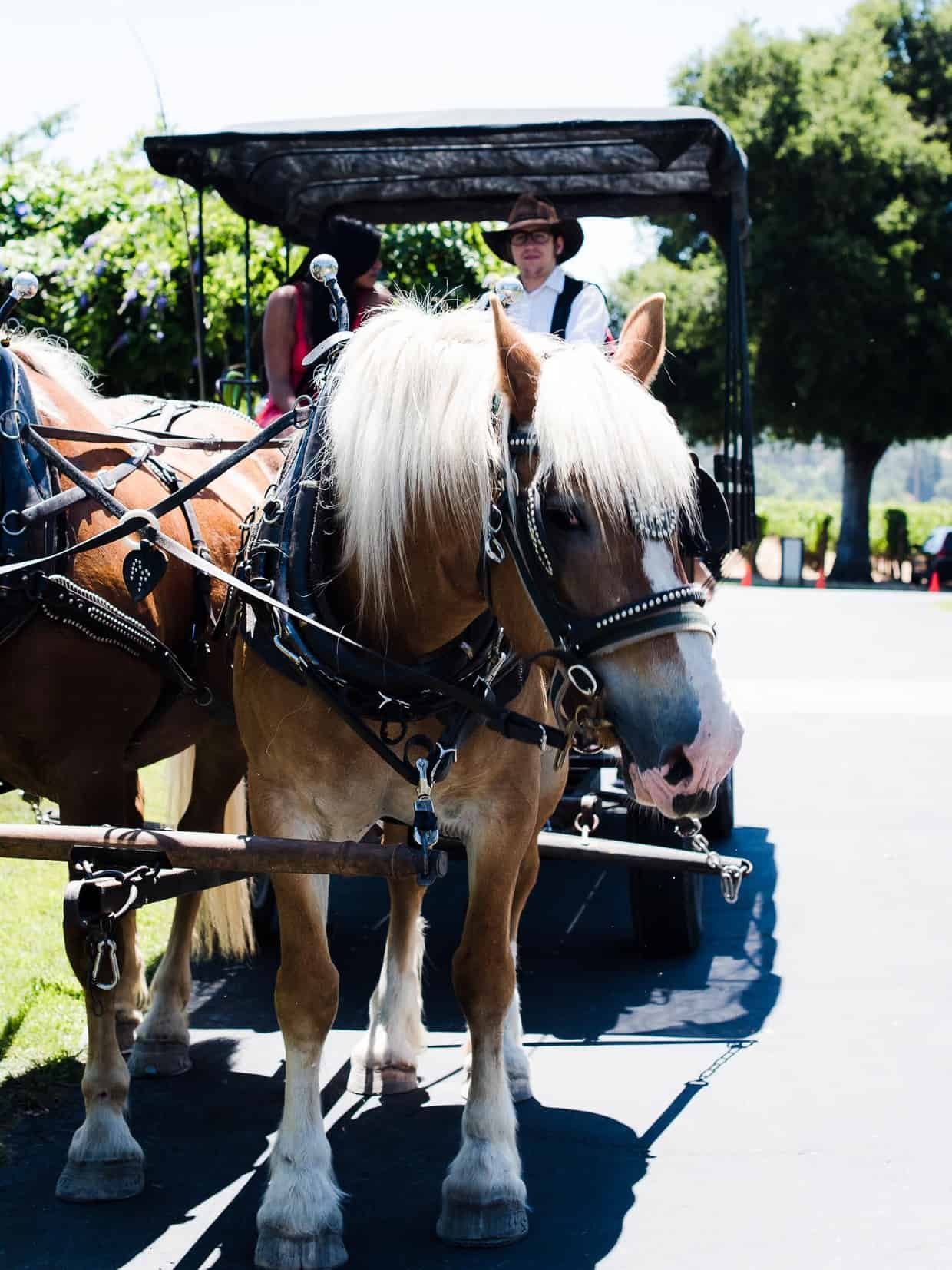 A horse drawn carriage tour is one way to explore Landmark Vineyards.