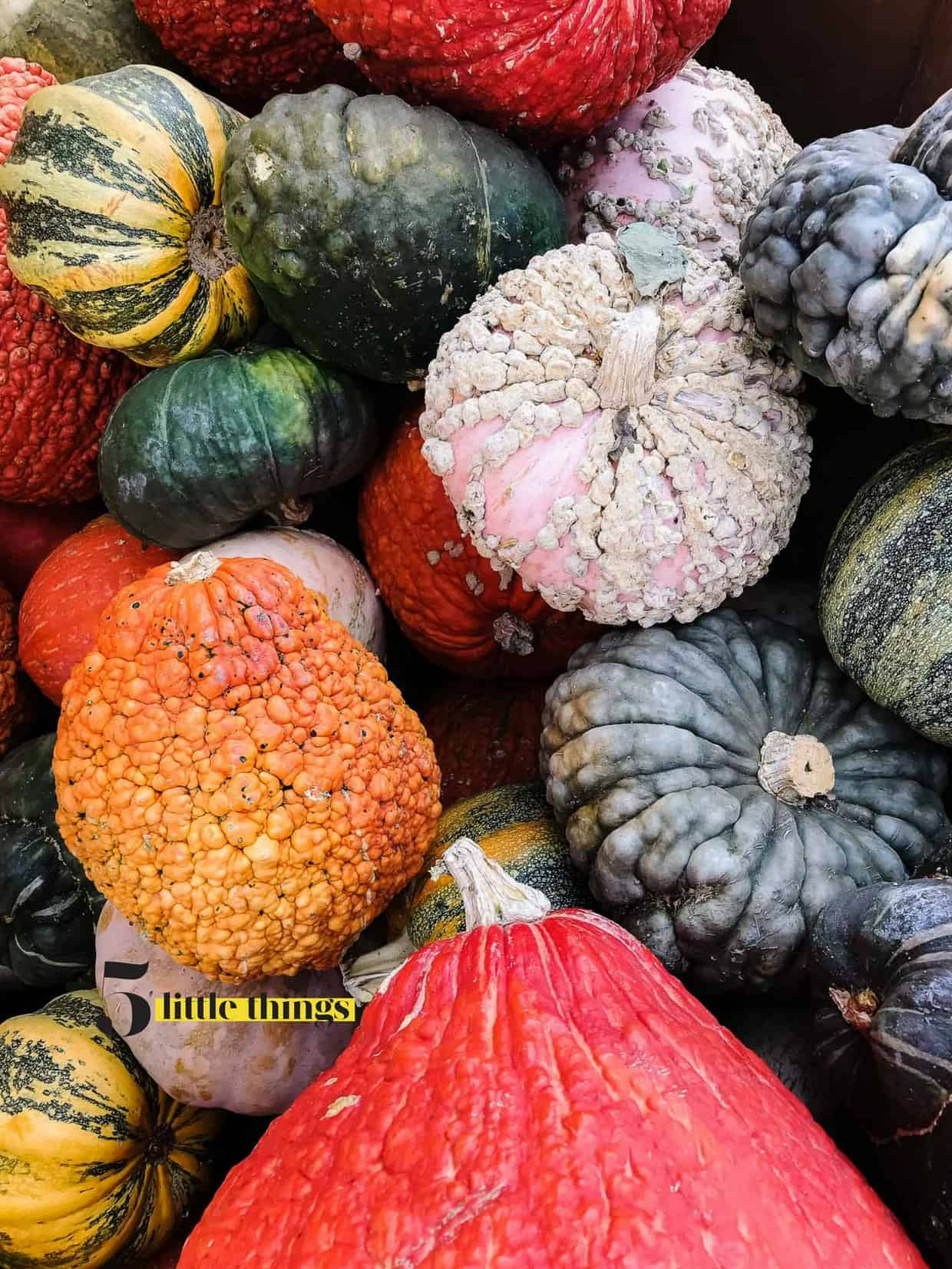 Colorful gourds and squash.