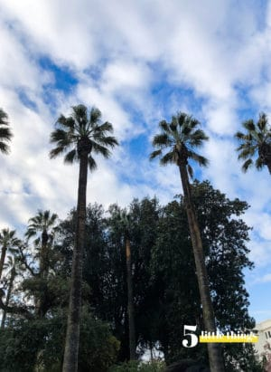 Palm trees in Sacramento.