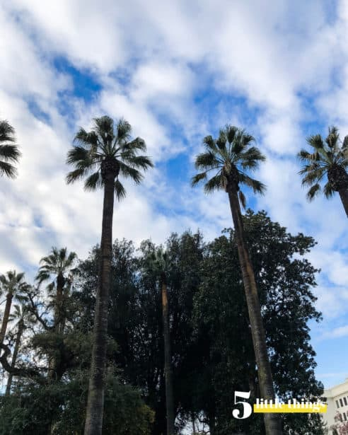 Palm trees in Sacramento.