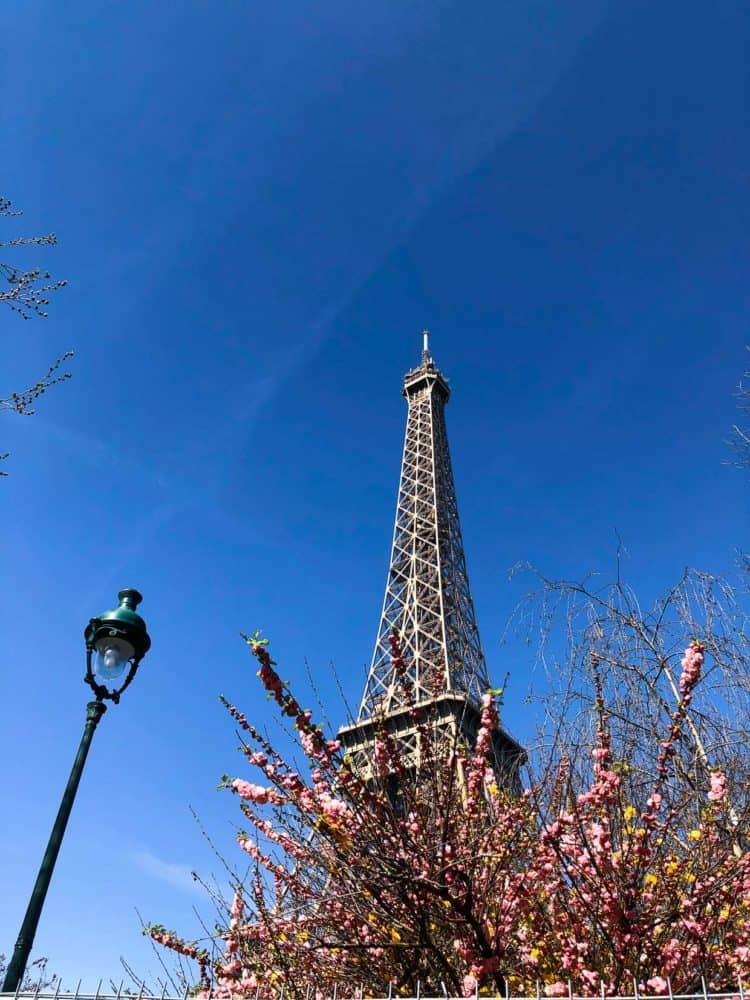 Eiffel tower with blossoming trees.