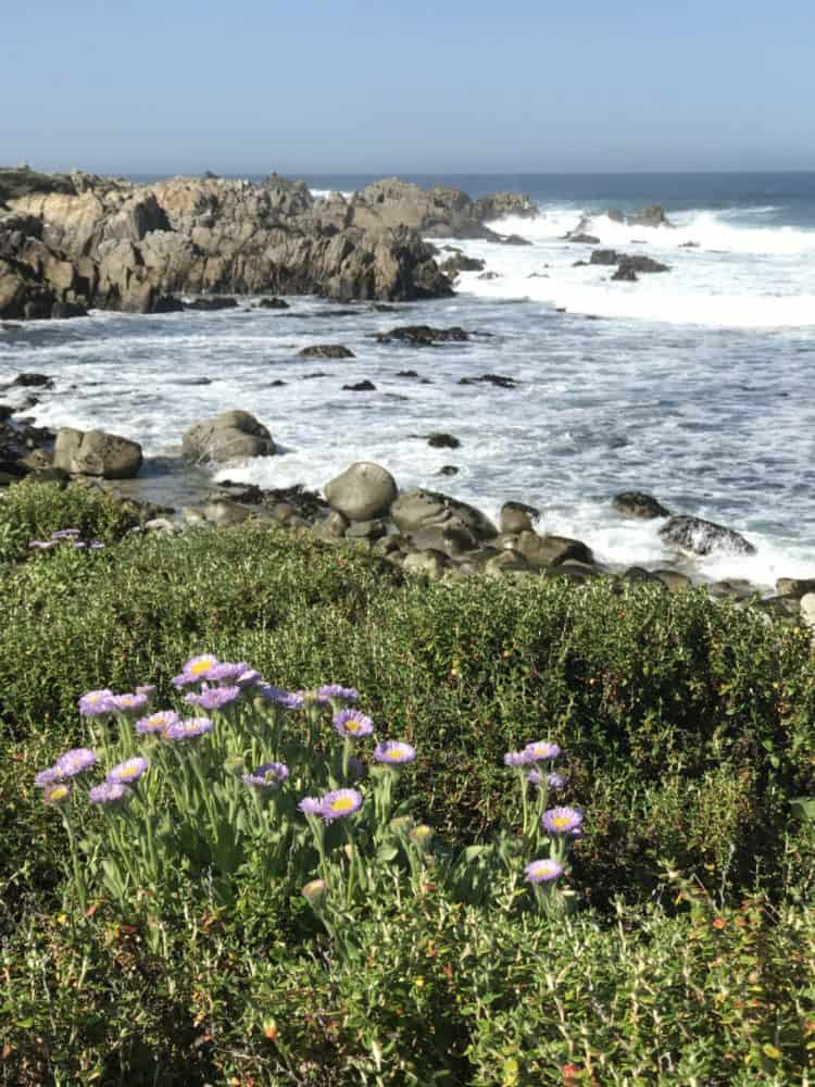 Coastline of Pebble Beach California