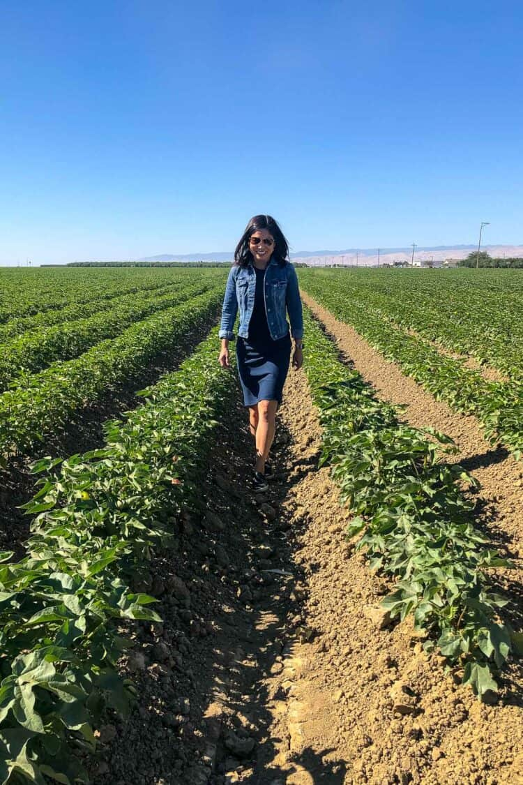 Walking through a cotton field while Touring Agriculture in Central Valley California